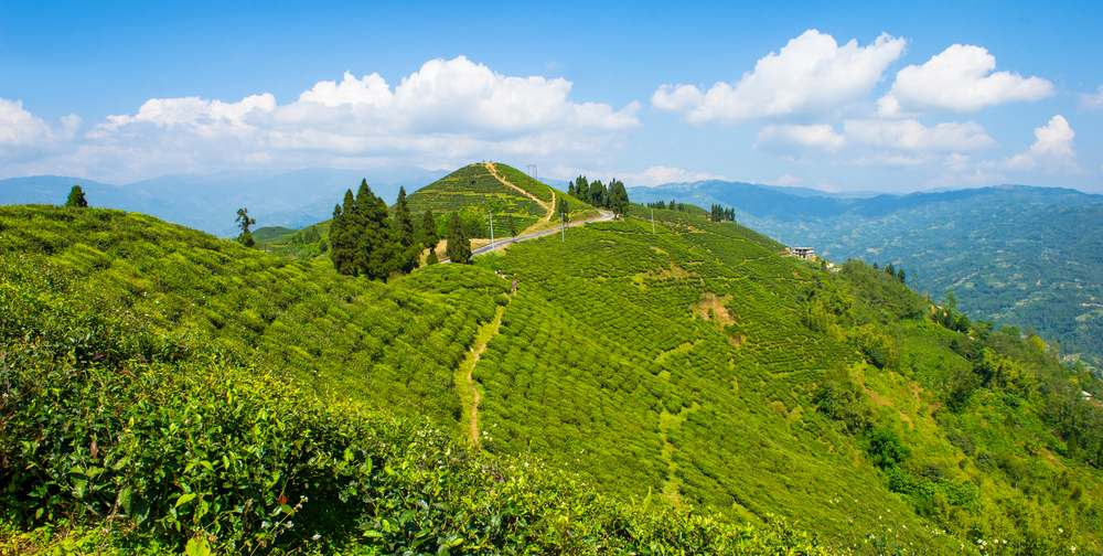 Ilam Nepal: An Open Garden Like Heaven