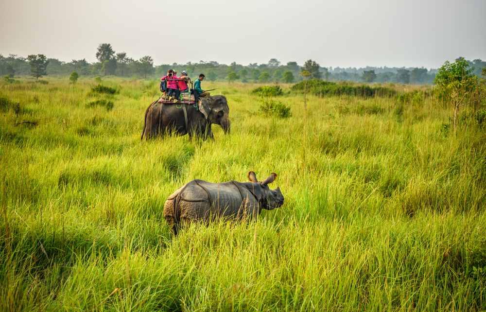 Top 10 Rare Animals Seen During Jungle Safari in Nepal