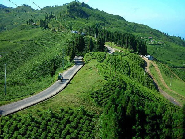 Ilam Hill Station of Nepal